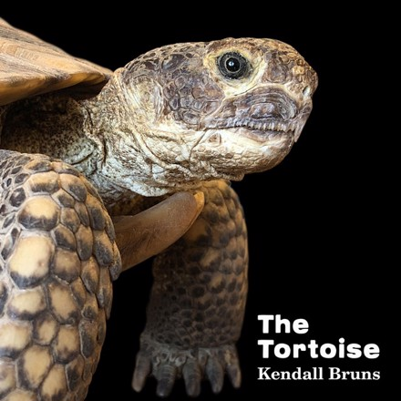 Kendall Bruns - The Tortoise